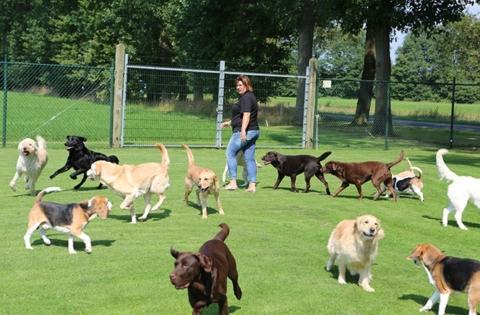 Kijk of uw hond op de facebook video's staat